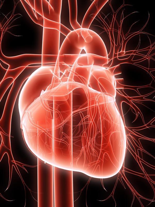 охотникам, больше почему в присутствии врача сильно бьется сердце это